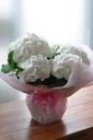 「母の日」-西洋アジサイ ホワイト系 鞠咲き-