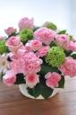 「母の日」-優しいピンクのディアママン-