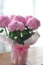「母の日」-西洋アジサイ ピンク系 鞠咲き-