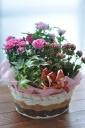 「母の日」-カーネ鉢のフラワーバスケット-