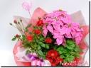 hana*PLAZA -花☆Plants-