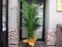 アレカヤシの鉢植え(籠付)