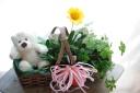 かわいい白くまちゃん花鉢セット