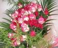 情熱と愛情のバラ50本の花束