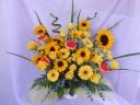 サンフラワー「sunflower 」