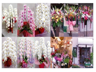 "フラワーショップ花一期~は�2744682://www.eflora.co.jp/shop/hanaichigo/access/"" target=""_top70地図</239796hopImg"")"
