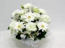 ペットの供花 ホワイトガーベラのアレンジメント