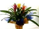 お手入れ簡単でお部屋の中が華やかになる花鉢B