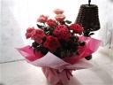 大変花持ちの良い四季咲きフォーエバーローズMIX