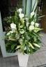 お祝い花「グリーン&ホワイト」