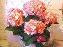 母の日ギフト「紫陽花White Pink」