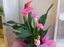 母の日ギフト「Pinkカラー」