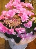 母の日ギフト「紫陽花Lovely Pink」