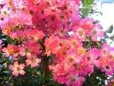 母の日ギフト「蔓バラ」