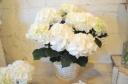 母の日ギフト「真っ白紫陽花」