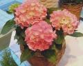 母の日ギフト「プチ紫陽花」