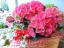 母の日ギフト「紫陽花&アイビー」
