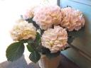 母の日ギフト「まん丸な紫陽花」