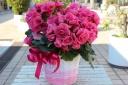 ベコニア*八重咲きピンク