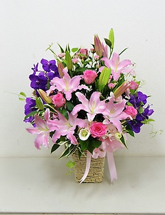 Pink Purple arrange