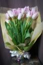素晴らしい春をプレゼント!可愛いピンクチューリップ