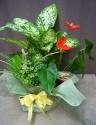 エキゾチックな観葉植物セット