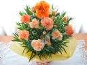 母の日|カーネーション花鉢 オレンジ プードル