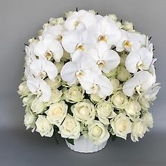 高貴な白バラ胡蝶蘭アレンジメント(胡蝶蘭3本)