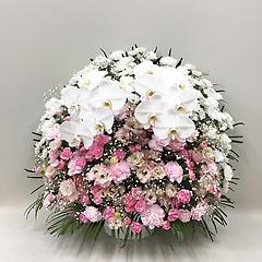 【供花】スフェアアレンジメントP胡蝶蘭2本入(H75)