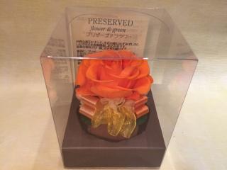 心のこもった1輪のバラ オレンジ クリアケース付き