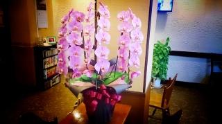 胡蝶蘭 ピンク 3本立ち