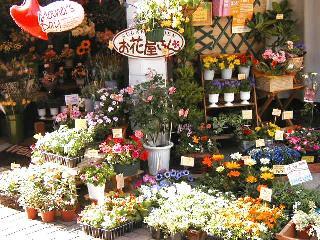 「シュガーガーデン お花屋さん」北区十条仲原のお花屋さん|【イーフローラ】フラワーギフトや花の宅配、送料無料も多数