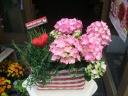 母の日寄せ鉢ギフトセット(あじさい&ハーブ)