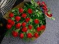当店おすすめ『高級赤バラの花束』
