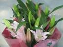 【ピンクのユリ 】花束