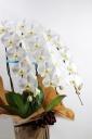 お祝い花・高級・豪華胡蝶蘭鉢G/BR2