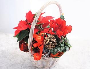【冬の贈り物 人気おすすめ】ミニポインセチアギフト