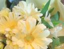 【PASTA】ふんわり黄色の大輪ガーベラブーケ