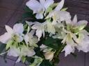 爽やかな純白のデンドロビューム (蘭)