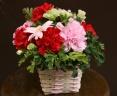 『ありがとう』感謝の気持ちをお花にこめて