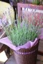 香りのラベンダーとお花で作ったドレッシングセット
