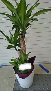 オフィスやリビングに育てやすい観葉植物をいかが?