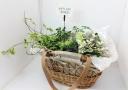 カゴBAG付き ナチュラルな鉢植えセット