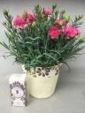 カーネーション鉢植え(ピンク) ハンドクリーム