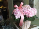 母の日「紫陽花の鉢植え・手付きバスケット」