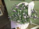 母の日「フレンチラベンダーの鉢植え」