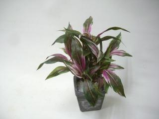 コーディーライン ≪造花!観葉植物≫