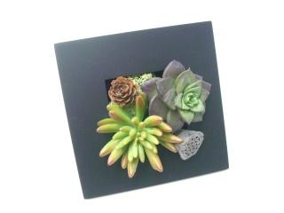 多肉植物 壁掛けOK≪造花!多肉植物≫