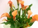 洗練された美しさ~オレンジのカラー~