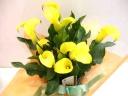 フレッシュ~ きれいな黄色のカラー~